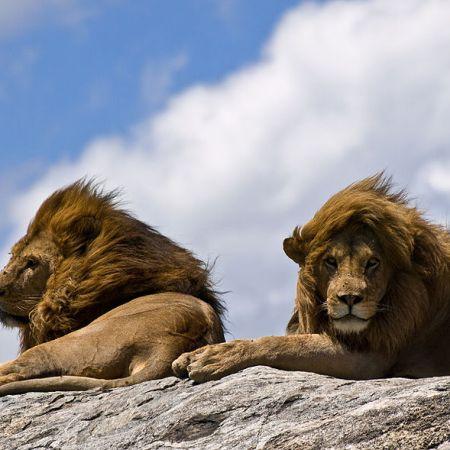 Ray Bradbury leones